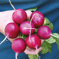 For something a little unusual give this superb radish a try. It's a lovely combination of purple skin and white flesh, and tastes delicious too! RHS