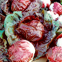 Radicchio Seeds - Palla Rossa Red Devil