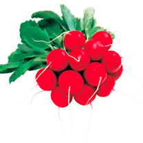 Image of Radish Seeds - Giro F1