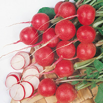 Image of Radish Seeds - Cherry Belle