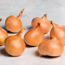 Bumper Autumn Planting Collection - Onion/Shallot/Garlic