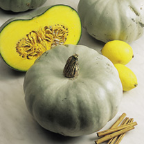 Squash Plants - Crown Prince