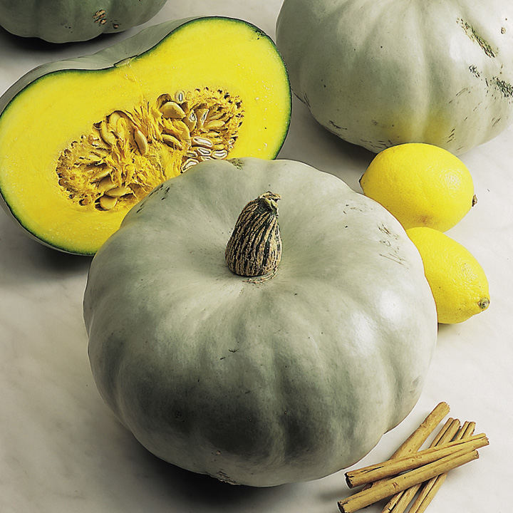Squash Seeds - Crown Prince F1