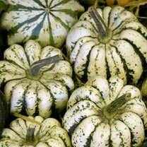 White squash with dark green stripes and deep ribs, up to 300g and 12cm diameter. Sweet, orange flesh. Trailing.