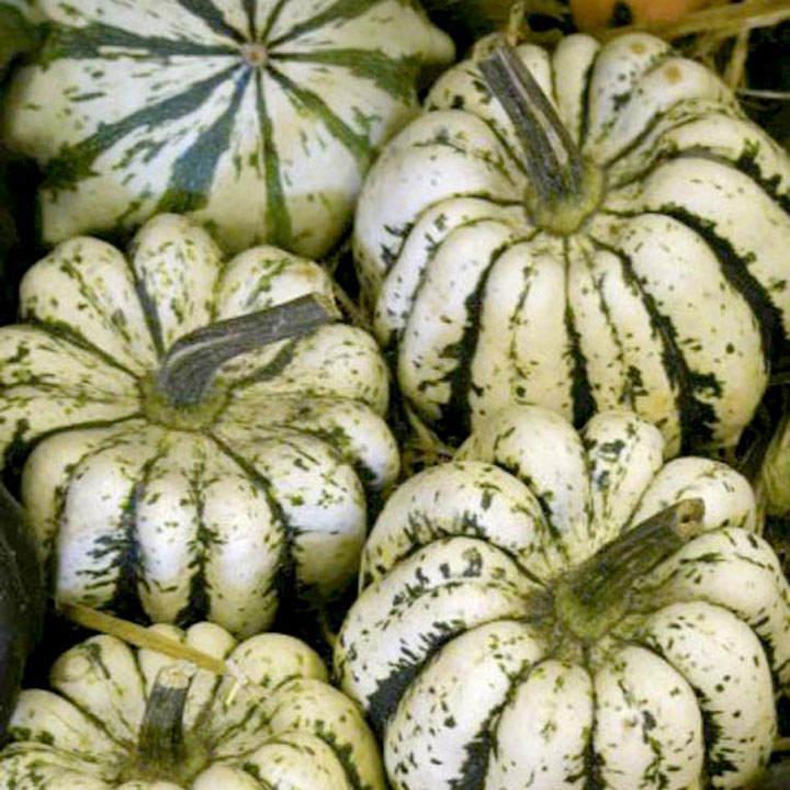 Squash & Pumpkin (Organic) Seeds - Sweet Dumpling