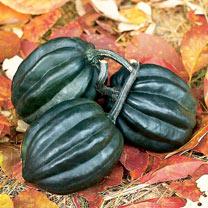 Squash & Pumpkin (Organic) Seeds - Tuffy
