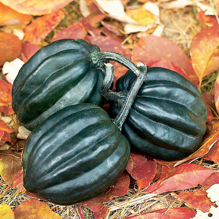 Squash & Pumpkin (Organic) Seeds - Tuffy