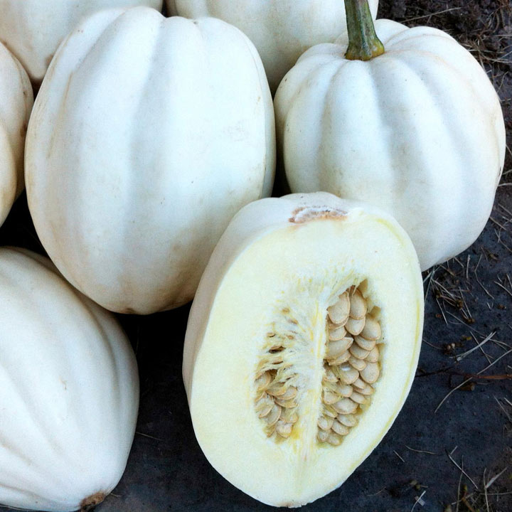 Squash Seeds - Mashed Potatoes