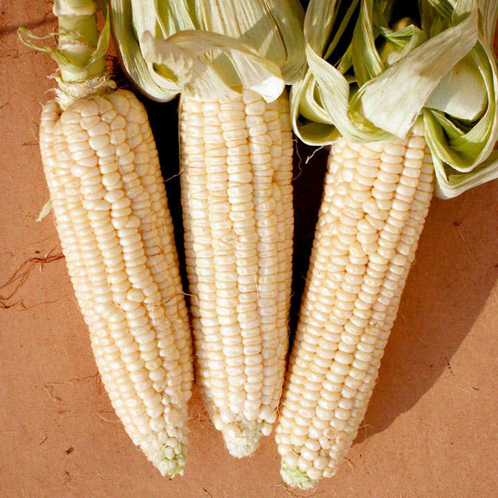 Sweet Corn Seeds - Stowell's Evergreen