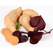 Sweet Potato Plants - Kaukura