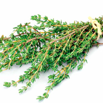 Herb Plant - Thyme