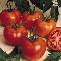 Tomato Plant - F1 Premio