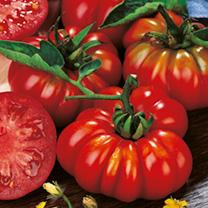 Tomato (Organic) Seeds - Costoluto Fiorentino
