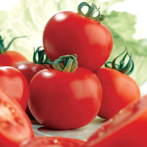 Popular and reliable tomato seeds with medium-sized fruits of fine shape and flavour. Ideal for greenhouse and outdoor growing. Medium fruited variety