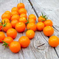 Tomato Seeds - Sungold F1