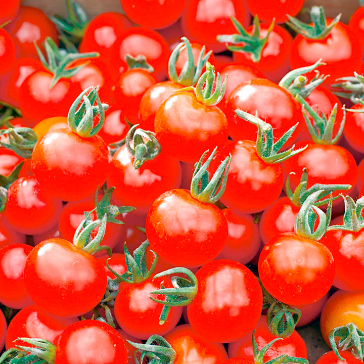 Tomato Plants - Our Selection