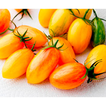Tomato Artisan Seeds - Blush Tiger