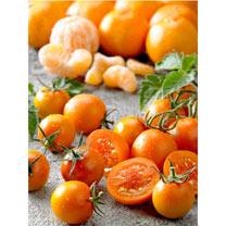 Tomato Grafted Plants - Tutti Frutti F1 Mandarin