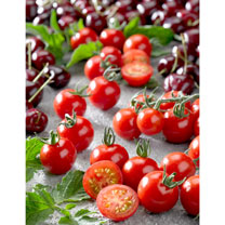 Tomato Grafted Plants - Tutti Frutti Cherry
