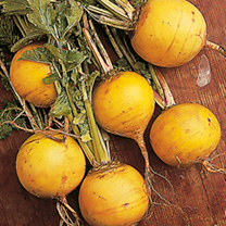A round, deep yellow variety. Juicy, sweet and an excellent keeper. This variety trialled, tested and recommended by the National Institute of Agricul