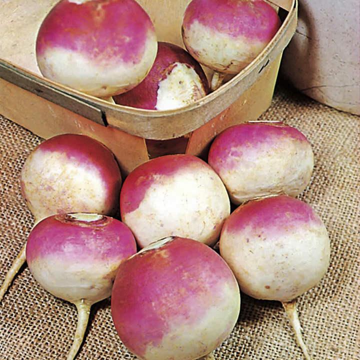 Turnip Seeds - Armand