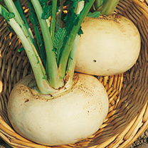 Turnip Seeds - Model White