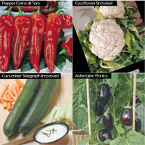 Vegetable Seed Pack with 12 Cell Propagator