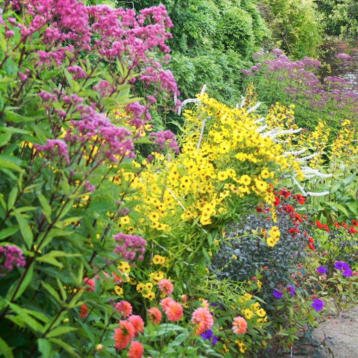 Cottage Garden Perennial Plants - Our Selection