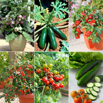 Patio Veg Plants Collection