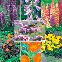 Image of Potted Perennial Plants - LUCKY DIP