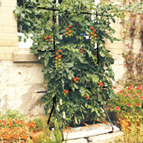 Maximise your space by growing vertically. Our best selling growing frame. Ideal for use inside the greenhouse and outside, designed to take a standar